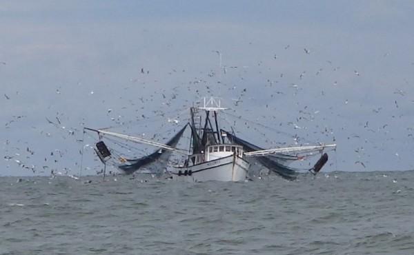 Shrimp Boat with Many Birds