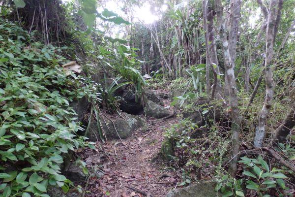 Gorda Peak National Park Trail on Virgin Gorda Island