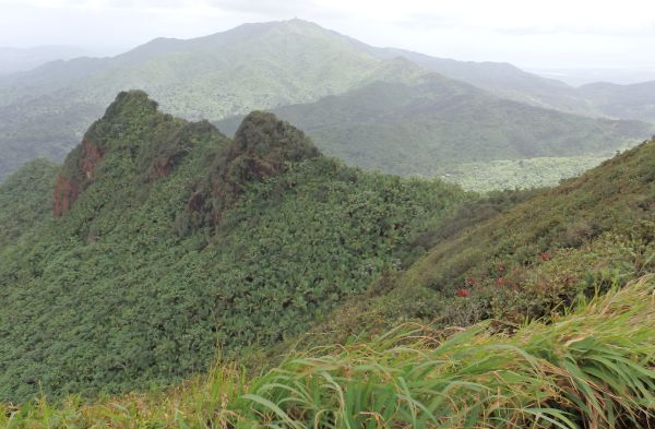 View from El Yunque Forest