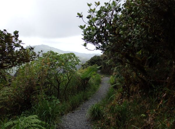 Hiking Trail in El Yunque National Forest