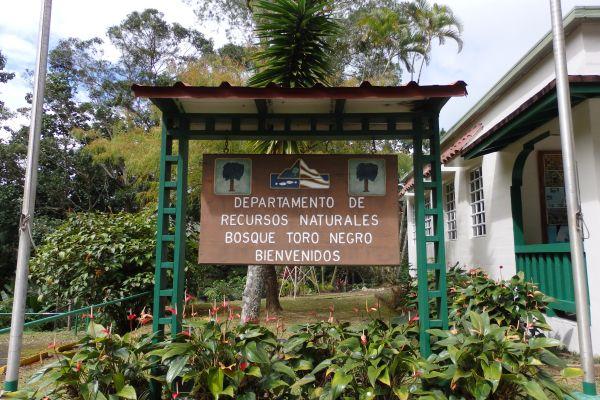 Toro Negro Forest Entrance