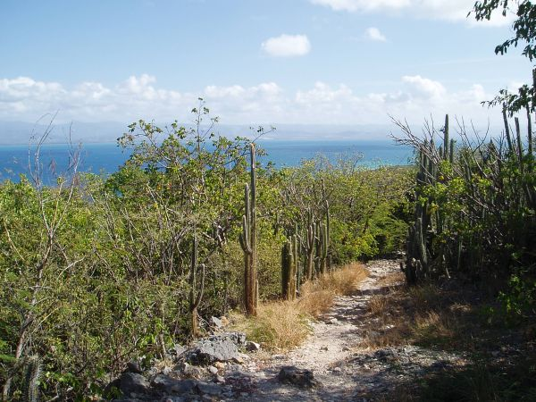 Trail to Lighthouse