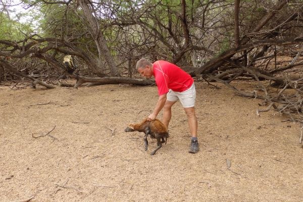 John rescued a young goat trapped in a water hole and put it on the ground.