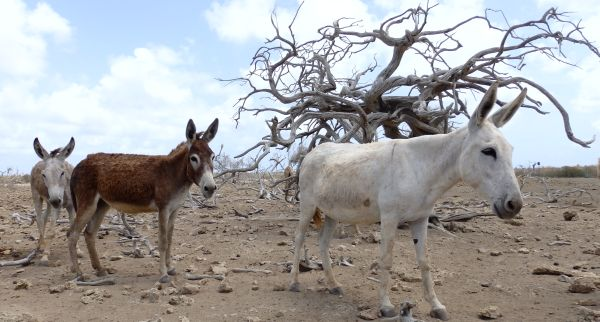 Donkeys in Santuary