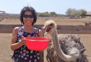 Hungry Ostrich at the Curacao Ostrich Farm