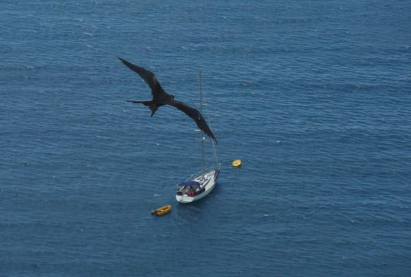 An Albatross flying over 'S/Y Jipcho' in Christmas Island, Australia (Photo Taken by Raphael Chosson)