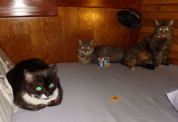 Our Cats (From Left: Sesame, Swat, and Enemy).  Note the gifts from the children, a Rubik's Cube and half an Oreo cookie with a kitty crunchy on top! Despite the presents, the cats don't look happy.