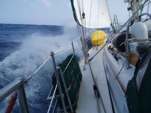 Sailing Bad Bunny Breaking Wave