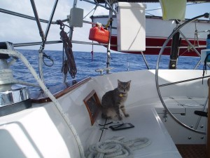 Our cat 'Swat' came out when sea was calm.