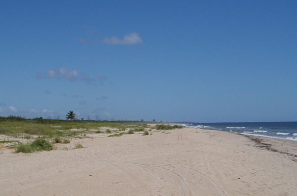 Endless Long Beach in Saint Lucie Inlet Preserve State Park, Stuart, Florida, USA